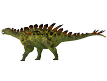 Huayangosaurus Side Profile Stock Photos