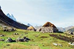 huayhuash秘鲁牛拉车旅行 免版税库存照片