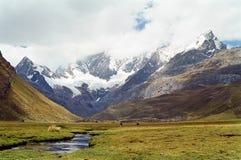 huayhuash秘鲁牛拉车旅行 免版税图库摄影