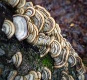 Huba grzyb na drzewnym bagażniku patrzeje w dół zdjęcie stock