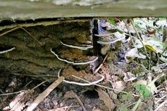 Huba grzyb w schollenbos w Capelle aan melinie IJssel W holandiach fotografia stock