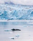 Hubbard冰川 免版税库存图片