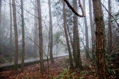 Hubei Badong kobiety ranku lasowej mgły szeroki las Fotografia Royalty Free