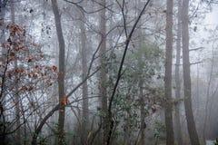 Hubei Badong kobiety ranku lasowej mgły szeroki las Zdjęcie Royalty Free