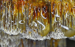 Hubka grzyb zdjęcie stock