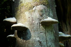 Hubka grzyba lub hubki huba zdjęcia stock