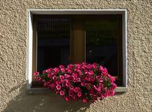 Hublot avec des fleurs Image stock
