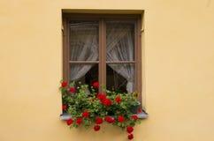 Hublot avec des fleurs Photographie stock libre de droits