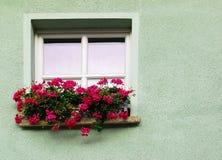 Hublot et fleur Photographie stock libre de droits