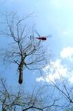 Hubschrauber, der einen Baum transportiert Stockfotografie