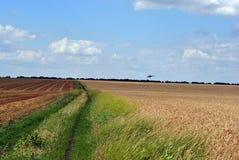 Hubschrauber fliegt zu Donbass, Ukraine, über einem Feld des reifen Weizens lizenzfreies stockfoto