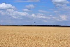 Hubschrauber fliegt zu Donbass, Ukraine, über einem Feld des reifen Weizens lizenzfreie stockfotografie