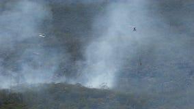 Hubschrauber und Bäume stock video