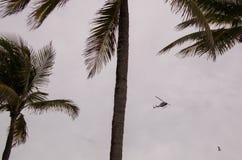 Hubschrauber zwischen Palmen againt Überwendlingsnahthimmel stockfoto