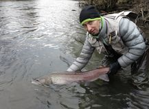 Hucho del salmone del Danubio che pesca in Europa centrale Immagine Stock
