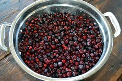 Huckleberries. Fresh picked Montana huckleberries on table Royalty Free Stock Photography