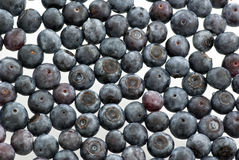 Huckleberry stock images