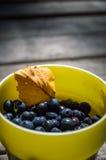 huckleberry Fotografia Stock Libera da Diritti