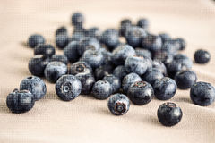 huckleberry Imagem de Stock Royalty Free
