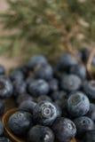 huckleberry Стоковые Изображения