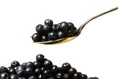Huckleberry sul cucchiaio Fotografia Stock Libera da Diritti