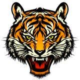 Huczenie tygrysa głowa Obraz Royalty Free
