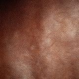 hud Arkivbilder