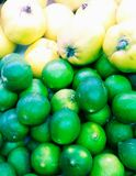 Huddle lime and quince royalty free stock image