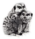 Huddling Meerkats Imagem de Stock Royalty Free