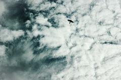Hudflänga fågeln Arkivbilder