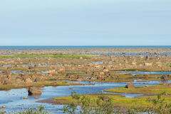 Hudson Bay Low Tide Stone Desert Royalty Free Stock Image