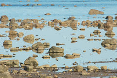 Hudson Bay Low Tide Stone Desert Stock Image
