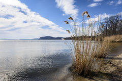 Hudson River Shoreline. The sandy shore of the Hudson River at Croton Point with a stand of Common Reed in the foreground and Hook Mountain in the background Stock Photos