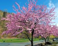 Hudson Trees Stock Photo