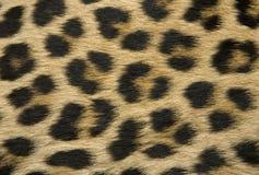 hudtextur för leopard s arkivfoton