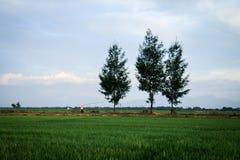 Hue landscape Stock Images