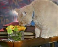 Huela las flores imagen de archivo libre de regalías