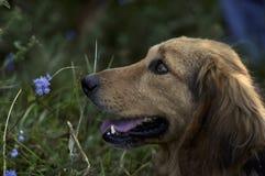 Huela las flores Fotografía de archivo