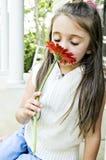 Huela mi flor roja Imagen de archivo libre de regalías