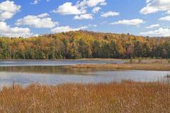Huelgas del otoño Imágenes de archivo libres de regalías