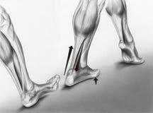 Huelgas del pie que caminan Foto de archivo libre de regalías