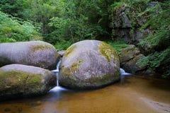 Huelgoat lasowy Kobyli aux Sangliers w Brittany Zdjęcie Stock