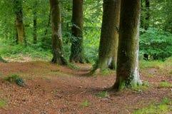 Huelgoat skog i Brittany Arkivbilder