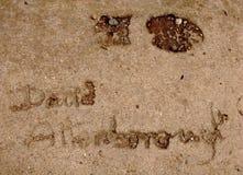 Huella de David Attenborough Fotografía de archivo libre de regalías