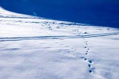Huella de las pequeñas pistas del animal y del esquí en polvo de la nieve Imagen de archivo libre de regalías