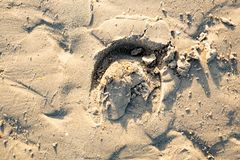 Huella del caballo en la arena de la playa fotografía de archivo