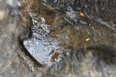 Huella del Carnotaurus del dinosaurio en la corriente cercana de tierra en Phu Faek Forest Park nacional, Kalasin, Tailandia Agua Imagenes de archivo