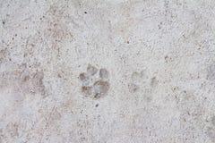 Huella del perro en piso del cemento Imagenes de archivo