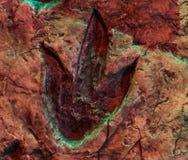 Huella del Theropod, fósil de una pista del dinosaurio, animales que vivieron en el período jurásico imagen de archivo