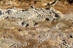 Huella en fango Imagen de archivo